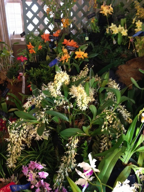 TOS display at Jacksonville Orchid Show picture 2
