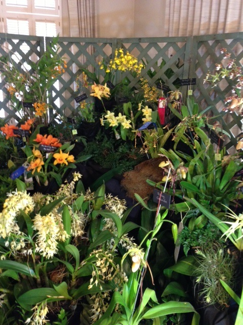 TOS display at Jacksonville Orchid Show picture 3