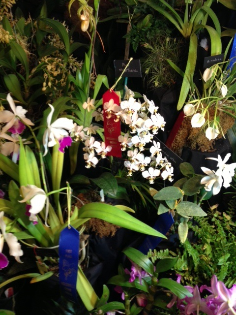 TOS display at Jacksonville Orchid Show picture 4