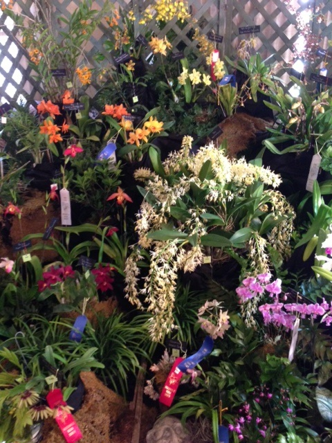 TOS display at Jacksonville Orchid Show picture 5